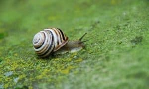 ¿Cuánto vive un caracol?