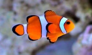 ¿Cuánto vive un pez?