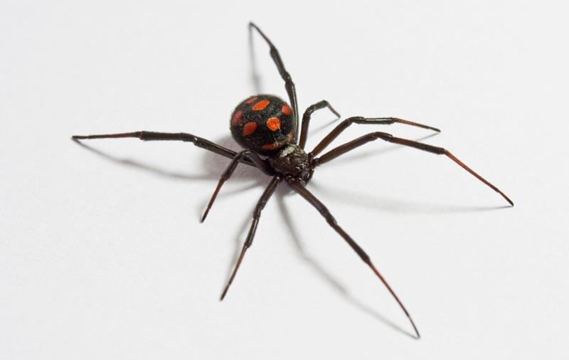 ¿Cuánto vive una araña?