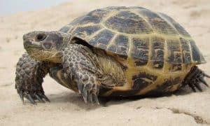 ¿Cuánto vive una tortuga?